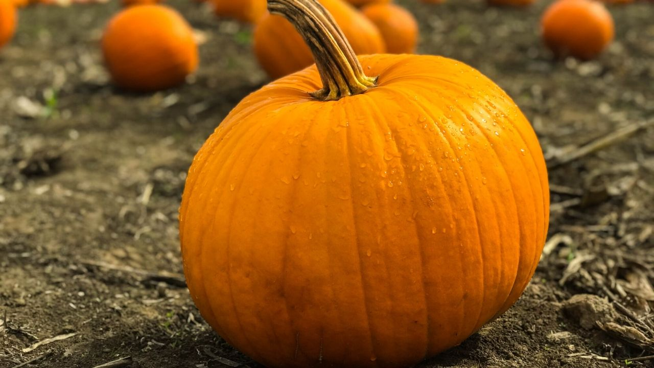 photo of a pumpkin that's all ready to be decorated with these no carve pumpkin decorating ideas